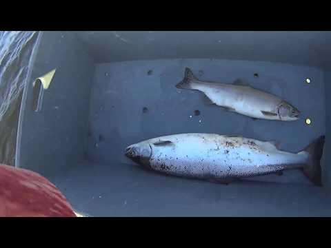 Рыбалка сетями на