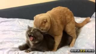 Кошка не хочет секса