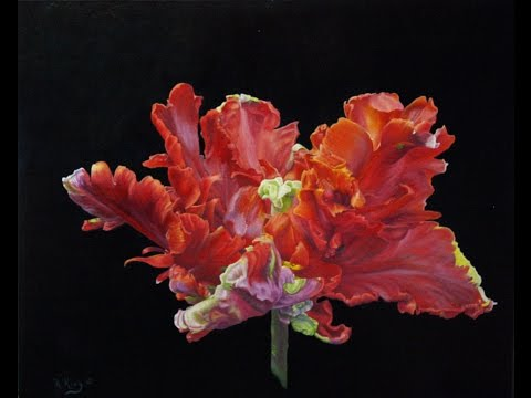 How to Paint a Red Parrot Tulip Flemish Technique Oils or Acrylic