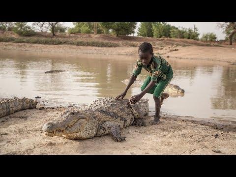 Vivre avec les crocodiles au Burkina Faso