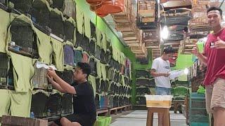 MBRK MAKIN MURKA KIRIM BURUNG TIAP HARI KE SELURUH INDONESIA