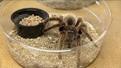 Arizona couple raises 75,000 spiders at their home