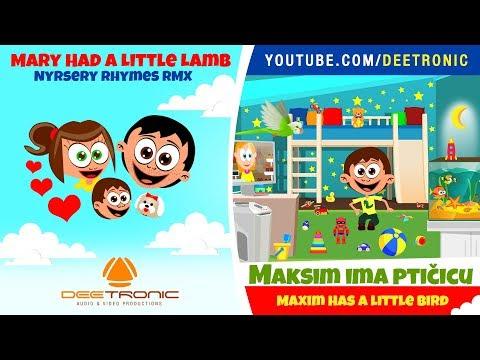 MAKSIM IMA PTICICU | Maxim Has a Little Bird | Nursery Rhyme Remix | Mary Had a Little Lamb RMX
