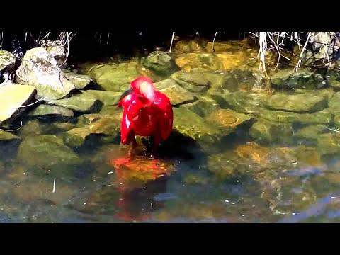 Birds of Eden - Plettenberg Bay Birds of Eden