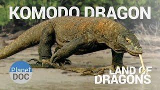 Komodo Dragon. Land of Dragons | Nature - Planet Doc Full Documentaries