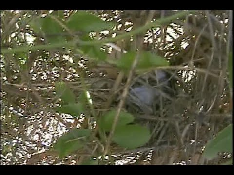 Making An Easy Backyard Wildlife Habitat