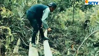 Download Mp3 Vidio Lucu  Gayo Male Ngebang Uten