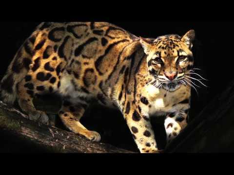 World Land Trust's Big Cat Appeal