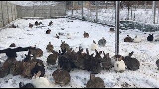 Кролики на снегу. Rabbits in the snow.