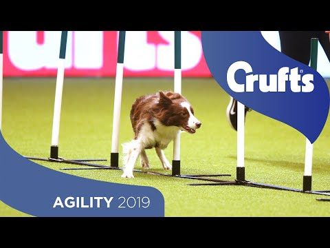 Agility  Crufts Singles Final: Small, Medium and Large | Crufts 2019