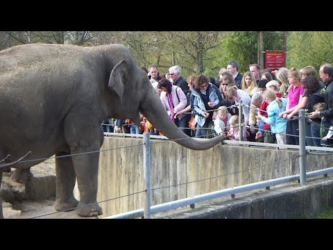 Zoo Elephant Tragically Kills Young Girl