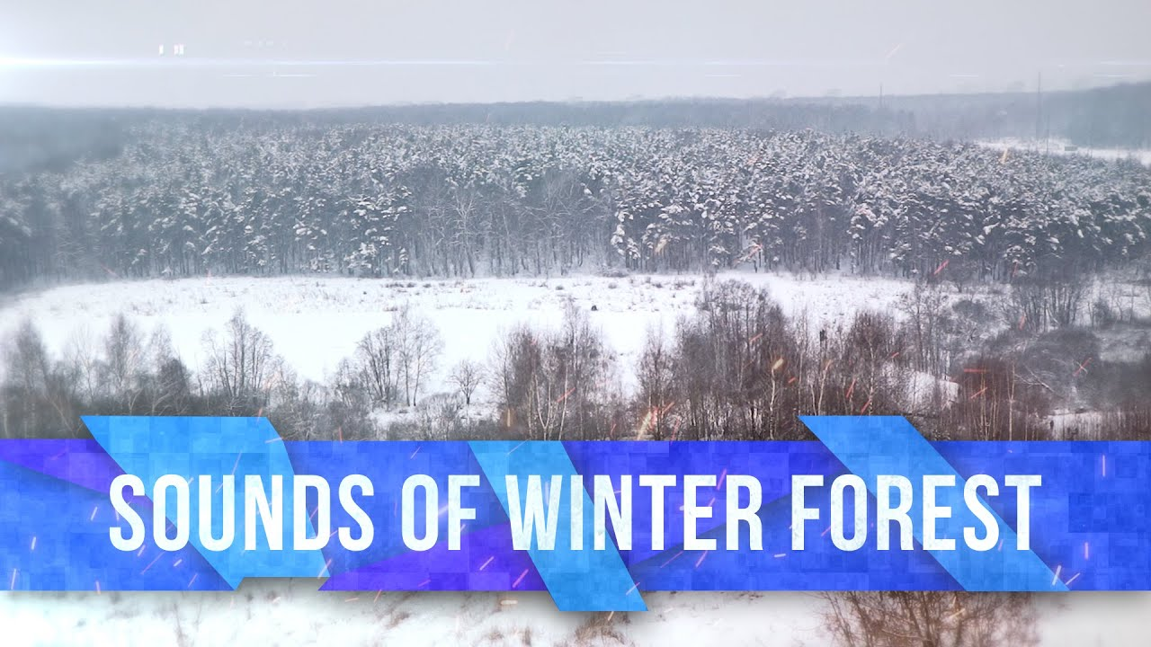 Sounds of winter forest | Звуки зимнего леса | 4K