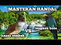 Masteran Handal Tengkek Buto Vs Kapas Tembak  Mp3 - Mp4 Download