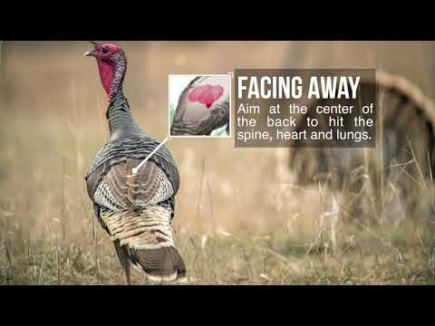 Turkey Shot Placement -Where To Aim On A Turkey For Bowhunting!