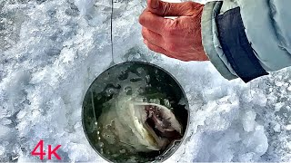 Рыбалка на Жерлицы в глухозимье Зимняя рыбалка на нижней Волге 2021