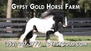 Horse Farm, Farm Tours in Ocala FL 34473