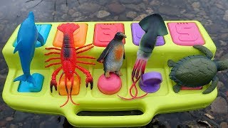 Pop Up Toys Sea Creatures Names Learn Colors For Fun Kids Safari Zoo Animals Toy Videos For Children