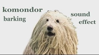 Komondor Video for Children: #Komondor #Barking - #SoundEffect - #A...