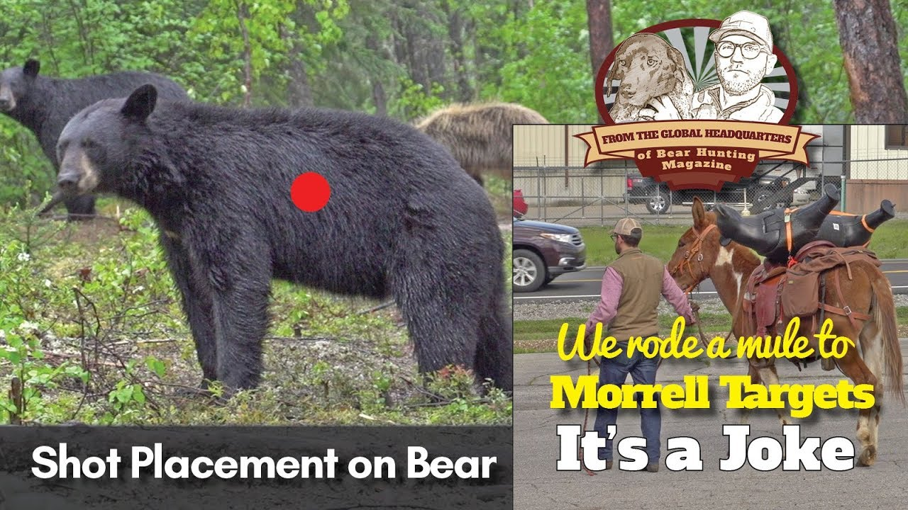 Vlog  12  Four Tips For Shot Placement On Bear  Rode A Mule To Morrell Targets  It U0026 39 S A Joke