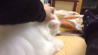 Увалень,леньтяй,Толстая жопа—мой кот