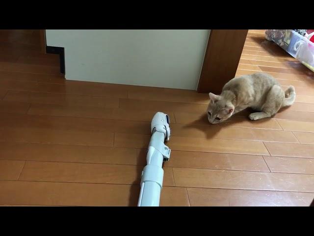 いろいろなパターンの猫パンチ動画  cats punch