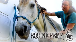 Equine PEMF - Pulsed Electromagnetic Field Therapy for Horses