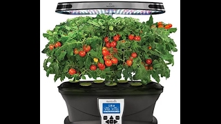 "Aerogarden  ""planting heirloom tomatoes"" indoors in Alaska"
