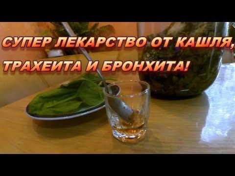 Супер лекарство от кашля, трахеита и бронхита! Рецепт сиропа подорожника