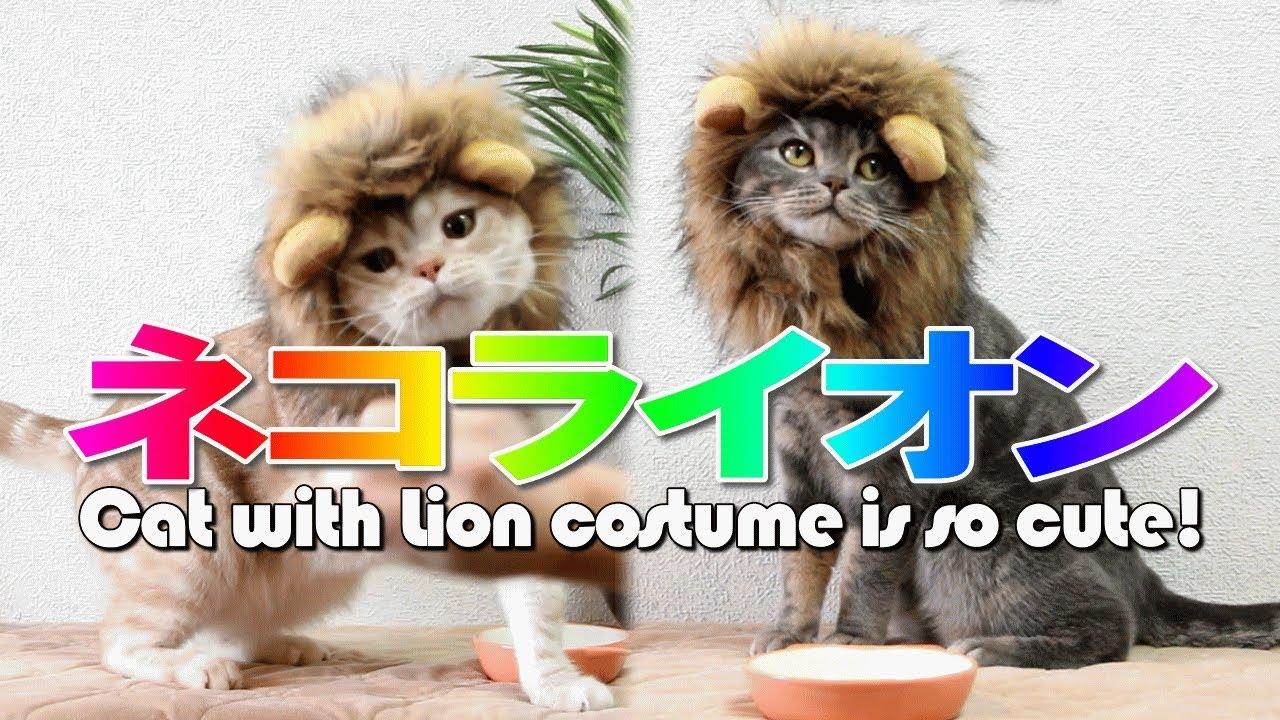a9c0891c8 猫のかわいいライオンコスプレ - Cat with Lion costume is so cute ...