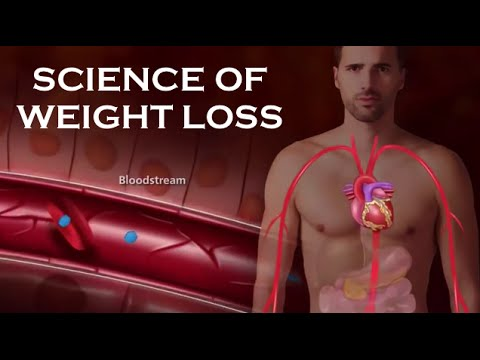 HOW INSULIN WORKS - Science of WEIGHT LOSS