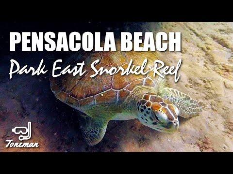 "Snorkeling at Pensacola Beach FL ""Park East"" - Sea Turtle!"