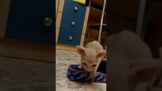 Котёнок весит 385г