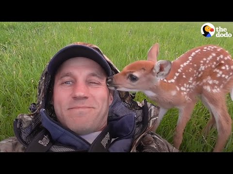 Injured Baby Deer Gets Rescued By The Perfect Guy