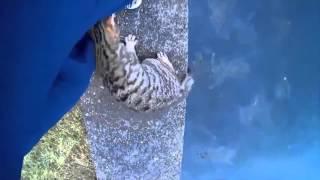 Кошки, очень смешные животные Самое смешное видео про котов