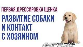 Первая дрессировка щенка лабрадора. Развитие собаки и контакт с хозяином. Собака для семьи