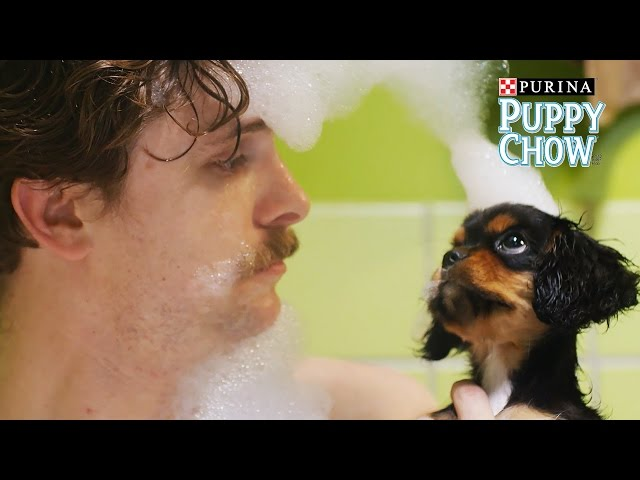 Puppyhood: We Met A Girl // Presented by BuzzFeed & Purina Puppy Chow