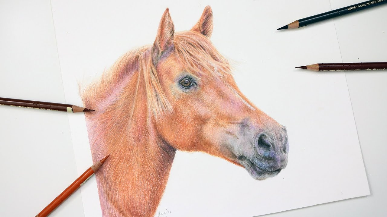 How To Draw a Horse With Colored Pencil | Drawing Tutorial