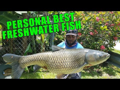 HUGE FRESHWATER FISH!!! Personal Best!