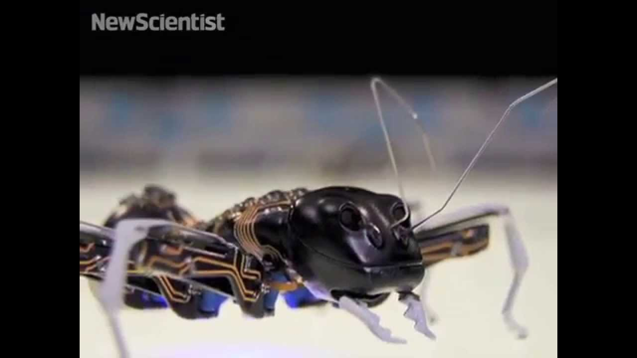 Big bionic ants team up to move objects