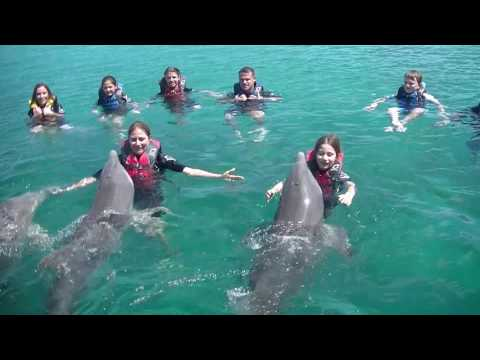 Swimming with Dolphins Nassau, Bahamas