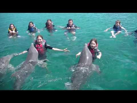 Swimming With Dolphins Nassau, Bahamas