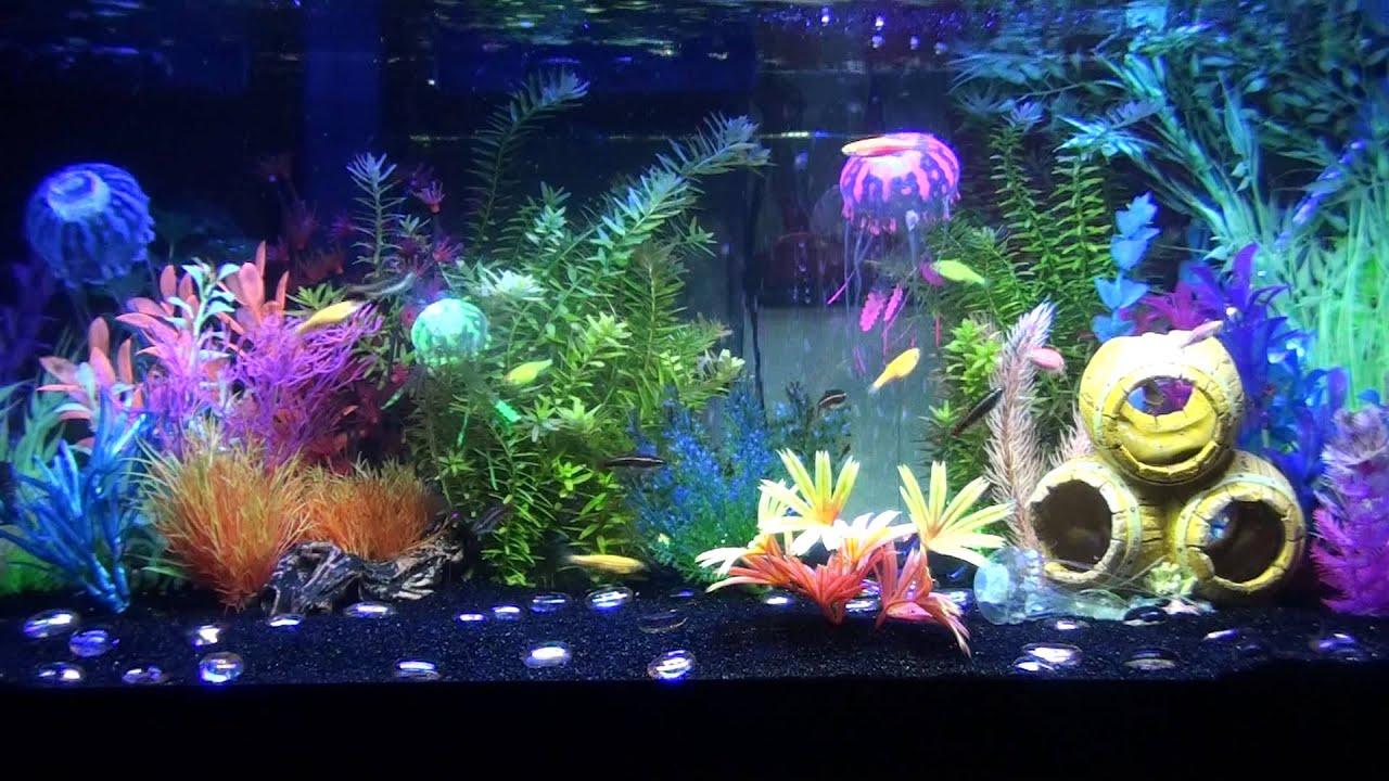 3 30 13 progress of glofish tank youtube for Glow fish tanks