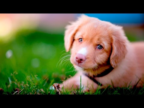 Cute Dog Videos #101