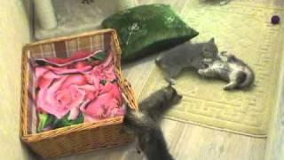 Коты2RC.mp4