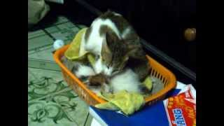 Video After Bath Mam Cat care for Baby Cats. download MP3, 3GP, MP4, WEBM, AVI, FLV Agustus 2018