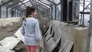 Opuszczona szklarnia