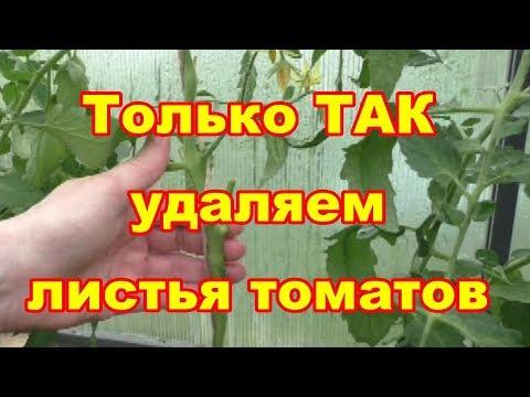 Удаляем листья томатов одним движением руки,без шума и пыли