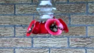 Bees Feeding At Hummingbird Feeder