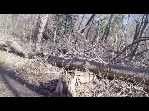 Copy of Single Track in Arnold Maryland