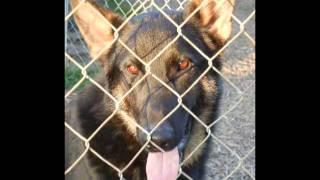 Good Shepherd Rescue Of North Texas